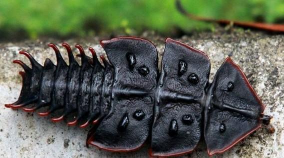 Самые ядовитые жуки в мире