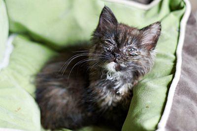 Клещи у кошек – это очень серьезно. В любом случае нельзя пускать дело на самотек – надо обязательно вывести паразитов