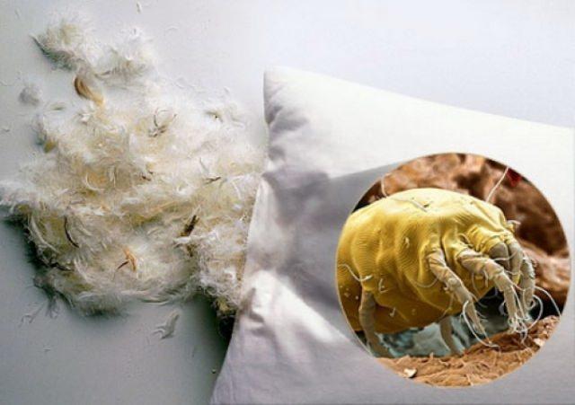 Обнаружить таких паразитов, как клопы или клещи в постельном белье или подушке может каждый