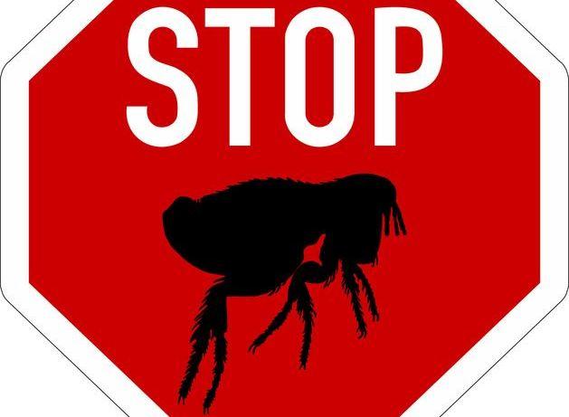Каплями «Чистотел» выполняются профилактические мероприятия, предотвращающие болезни, передаваемые эктопаразитами