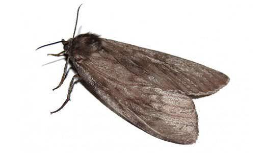 Чтобы отпугнуть насекомых в дальнейшем все поверхности шкафов можно протереть изнутри уксусным раствором