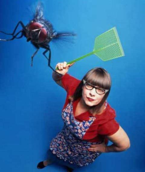 Любая борьба против мух начинается с места выявления их обитания и размножения