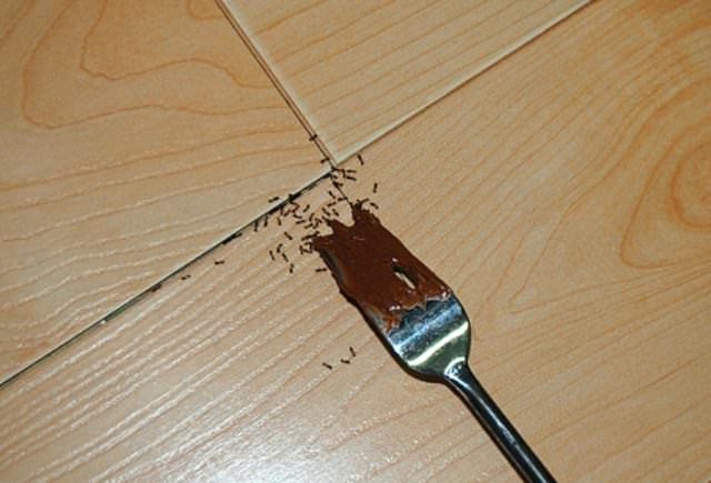 Избавиться от разных типов муравьев можно при помощи народных средств. Многие из них найдутся дома у любого человека