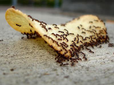 Химические инсектициды принадлежат к веществам острого отравляющего действия – они мгновенно уничтожают насекомых. С их помощью можно значительно сократить количество вредителей