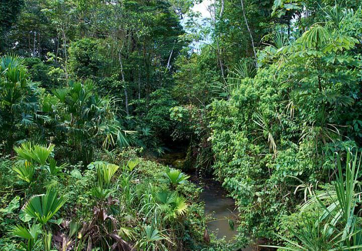 В природе мексиканские тараканы обитают во влажных лесах Южной Америки