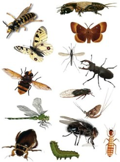 Cуществует огромное количество различных типов насекомых, влияющих на жизнь человека