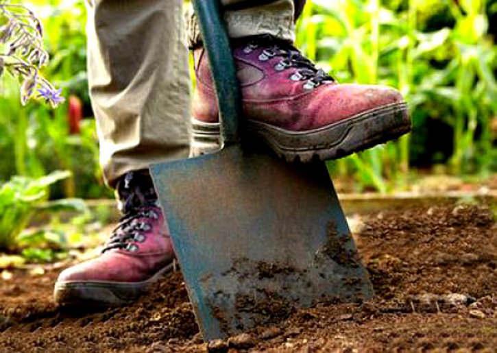 Перекапывая землю старайтесь не разбивать крупные комья земли