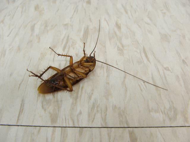 Аэрозольное средство уничтожит всех тараканов в доме очень быстро