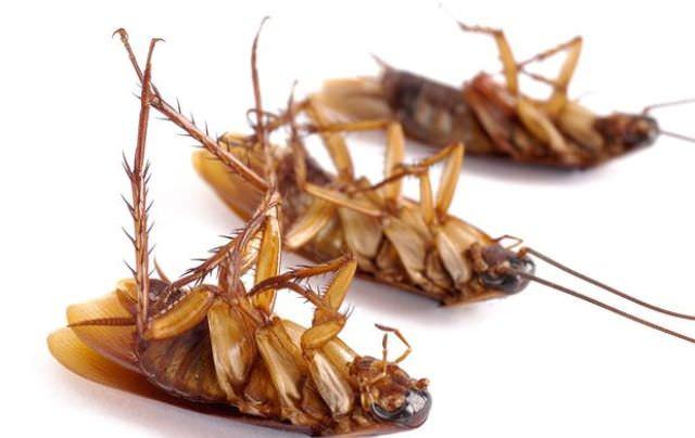 Если прусаки хозяйничают на кухне в небольшом количестве, можно ограничиться карандашом, порошком или гелем