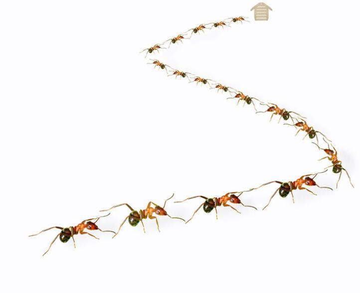 Действие «Дэты» приводит не к смерти насекомых, а к тому, что они спешат покинуть место его нанесения как можно скорее