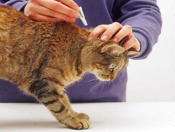 Необходимо раздвинуть шерсть животного в межлопаточном пространстве, и нанести препарат на видимые кожные покровы