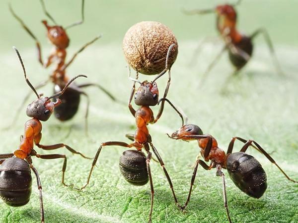 Картинки по запросу муравьи интересные факты