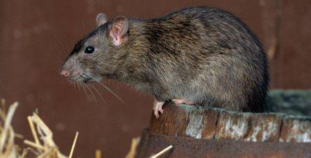 Случай, когда животное прожило 7 лет, занесен в книгу рекордов Гиннеса и является единственным, официально подтвержденным на данный момент
