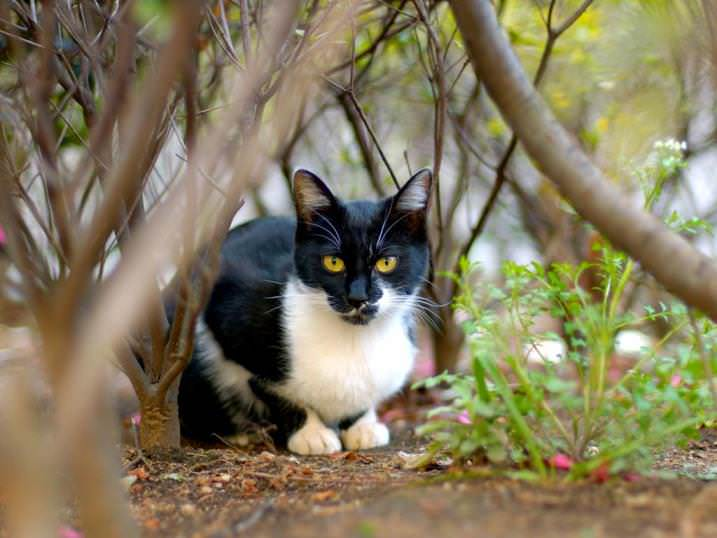 Берутся кошачьи паразиты с улицы