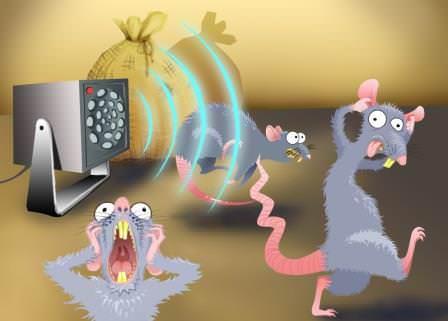 Ультразвук от крыс действительно помогает