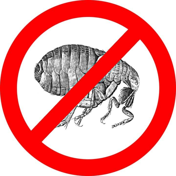 Паразитирующие на животном насекомые погибают в течение двенадцати часов