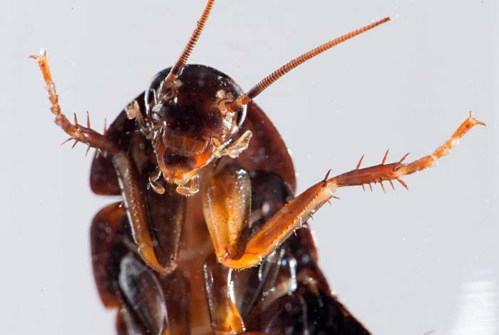 Потребители утверждают, что «Рейд» помогает избавиться от тараканов