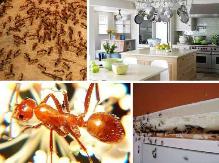 Борьба с муравьями при помощи «Комбата» должна быть комплексной