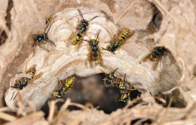 Достаточно часто люди предпочитают использовать народные методы борьбы с насекомыми. Они являются достаточно действенными и более безопасные для здоровья, чем химические средства